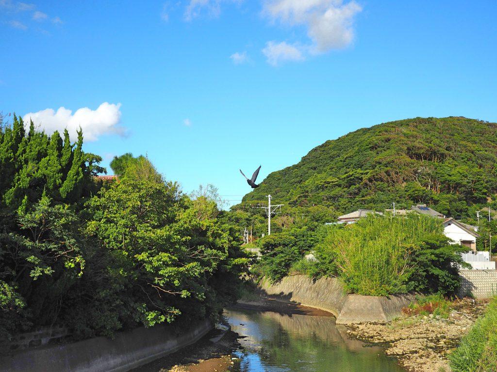 写真は今いる千葉県金谷の風景