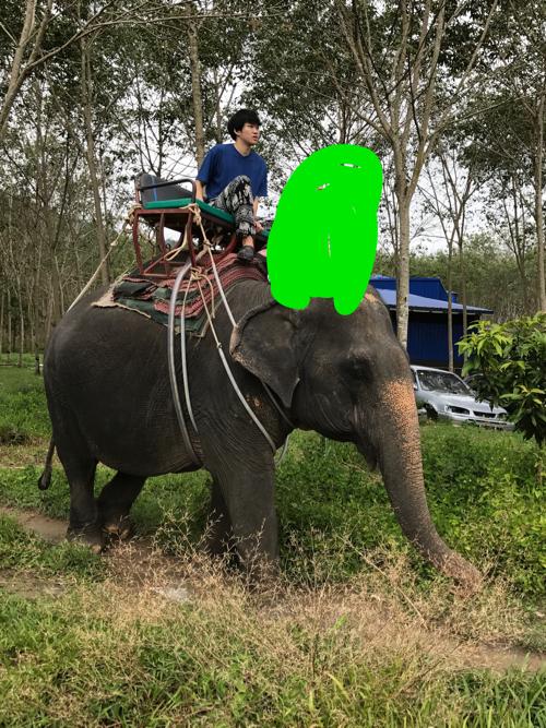 プーケットでゾウ乗りツアーに参加して、ゾウに乗ったゾウ